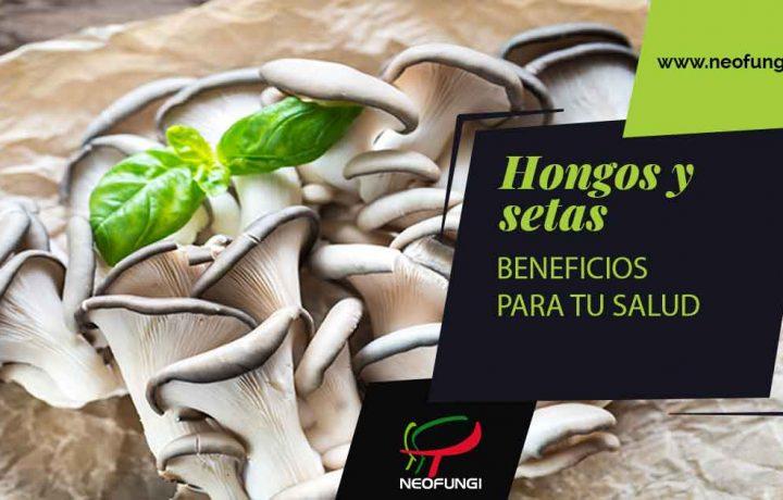 Beneficios de los hongos y setas para tu salud